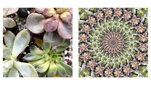 CREATE YOUR OWN MAGIC - Succulents