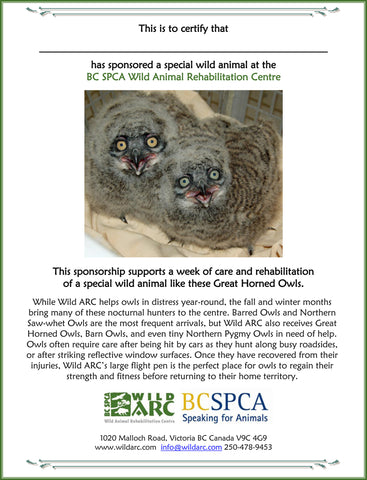 One week of care for an owl at Wild ARC