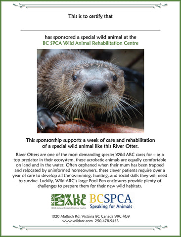 One week of care for a river otter at Wild ARC