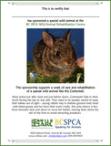 One week of care for a cottontail at Wild ARC