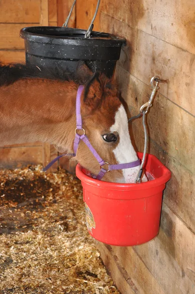 Formula for an orphaned foal