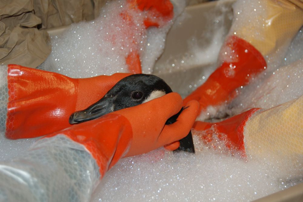Oil spill bath for a bird