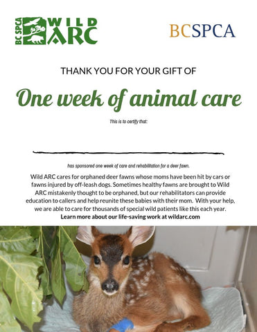 One week of care for a fawn at Wild ARC
