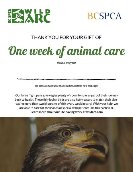 One week of care for an eagle at Wild ARC
