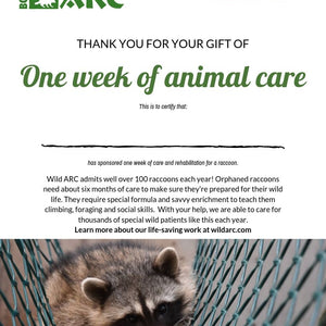 One week of care for a raccoon at Wild ARC