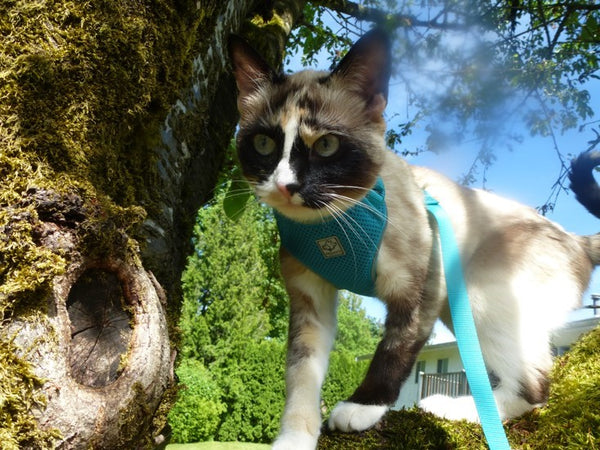 Adventure Kitty Harness