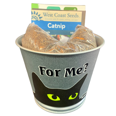 Catnip bundle