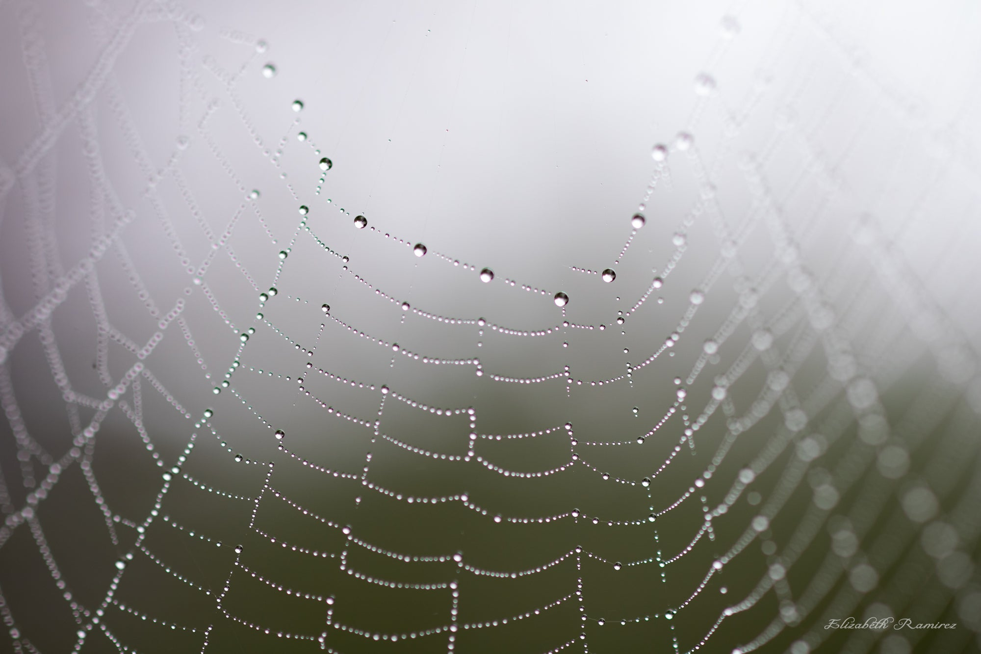 """Dew Drops On a Spiderweb"" Prints and Products"