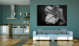 Black and White Wildflower - Art Print