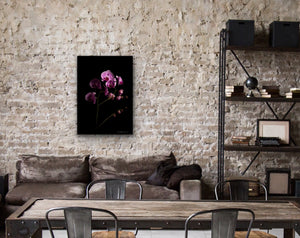 Orchids coming out of the darkness - Metal Print