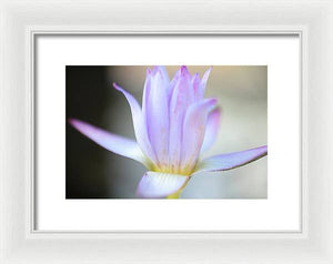 Beautiful pond lily - Framed Print
