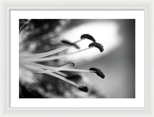 Black and White Lily - Framed Print
