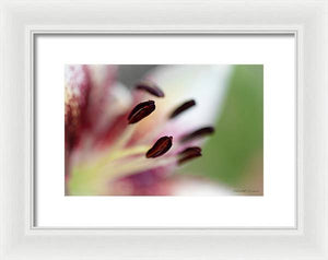 Calla Lily Series Coffee Beans - Framed Print