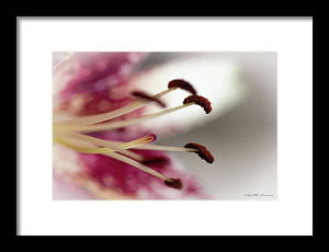Calla Lily Series Piston - Framed Print