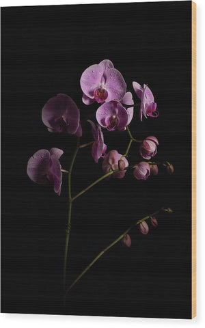 Orchids coming out of the darkness - Wood Print