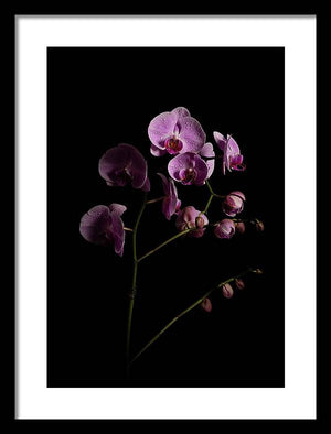 Orchids coming out of the darkness - Framed Print