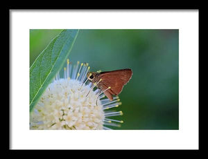 The nectar - Framed Print