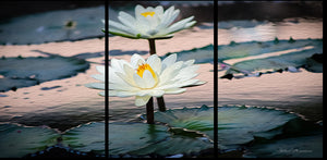 Water Lilies a la oil painting 54x27 in. Canvas Triptych Luxury for your home.