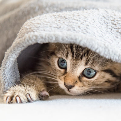 Buy a Blanket For a Shelter Cat Meow