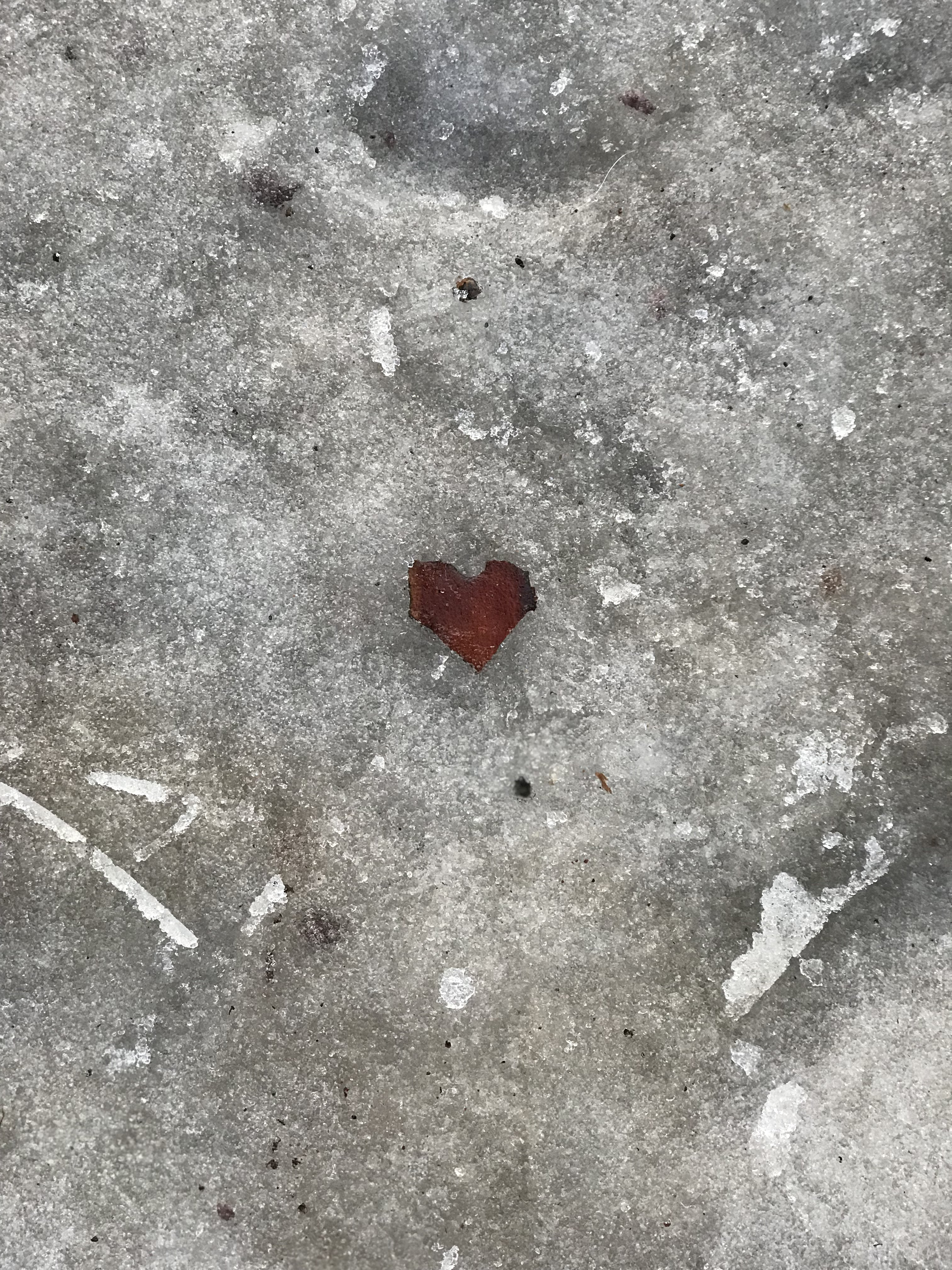 original fine art photography print of a heart in nature