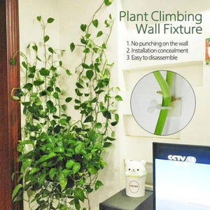 (Factory Outlet) Plant Climbing Wall Fixture