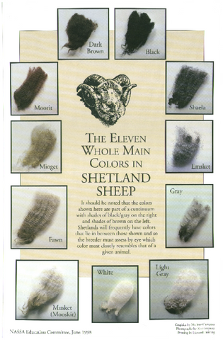 The Eleven Whole Main Colors in Shetland Sheep