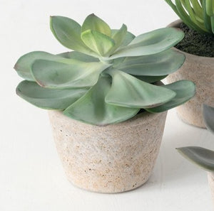 Succulent Potted Plant - 3
