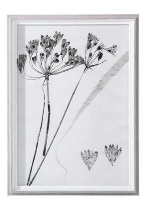 Botanical Framed Print - Botanical 2