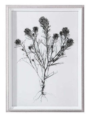 Botanical Framed Print - Botanical 6