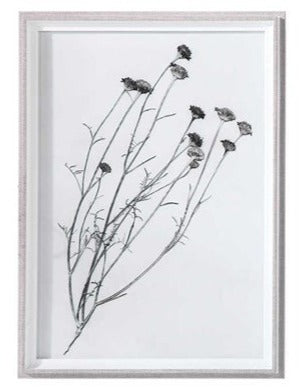 Botanical Framed Print - Botanical 11