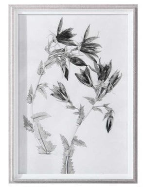 Botanical Framed Print - Botanical 10
