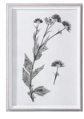 Botanical Framed Print - Botanical 12