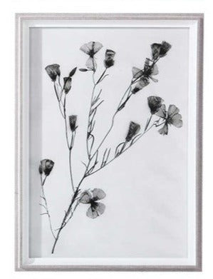Botanical Framed Print - Botanical 8