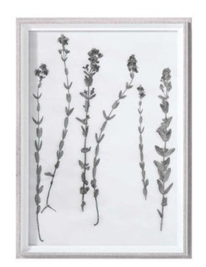 Botanical Framed Print - Botanical 3