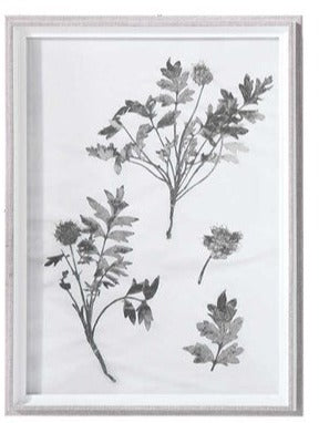 Botanical Framed Print - Botanical 5