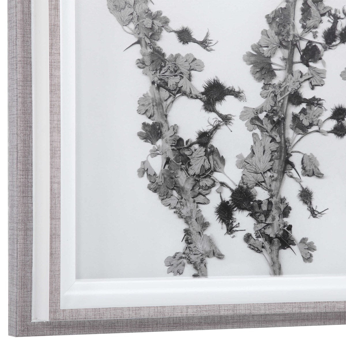 Botanical Framed Print - Botanical 1