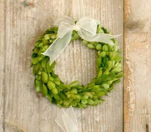 Preserved Boxwood Wreaths with Ivory Ribbon - Small