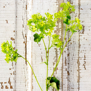 Lady's Mantle Stem
