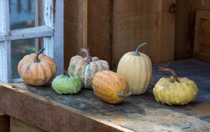 Miniature Pumpkins Collection, set of 6
