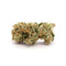 Verte West Motor Breath Dried Cannabis - Lot 21-P17
