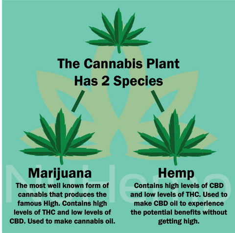 difference between cannabis and hemp