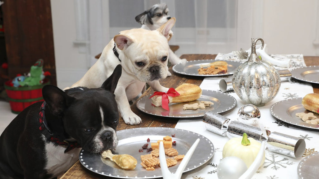Simple Ways to Show Thanks to Your Dog & Celebrate Petsgiving