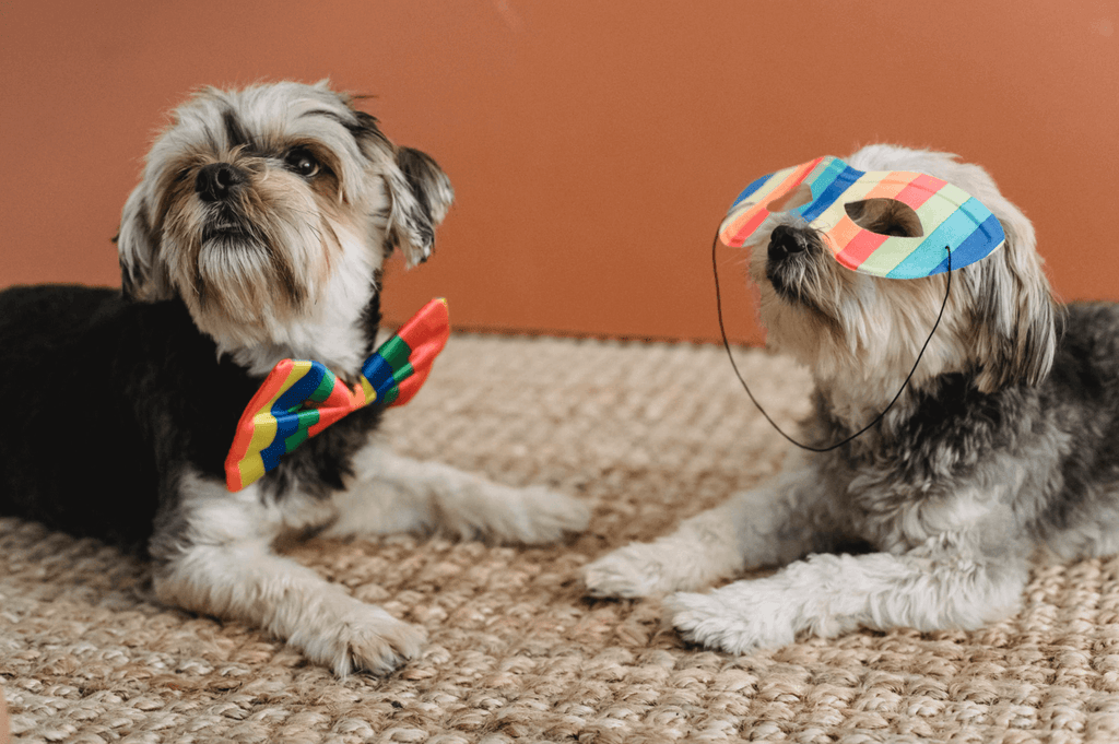 Puparazzi Ready: Tips for Celebrating National Dress Up Your Pet Day
