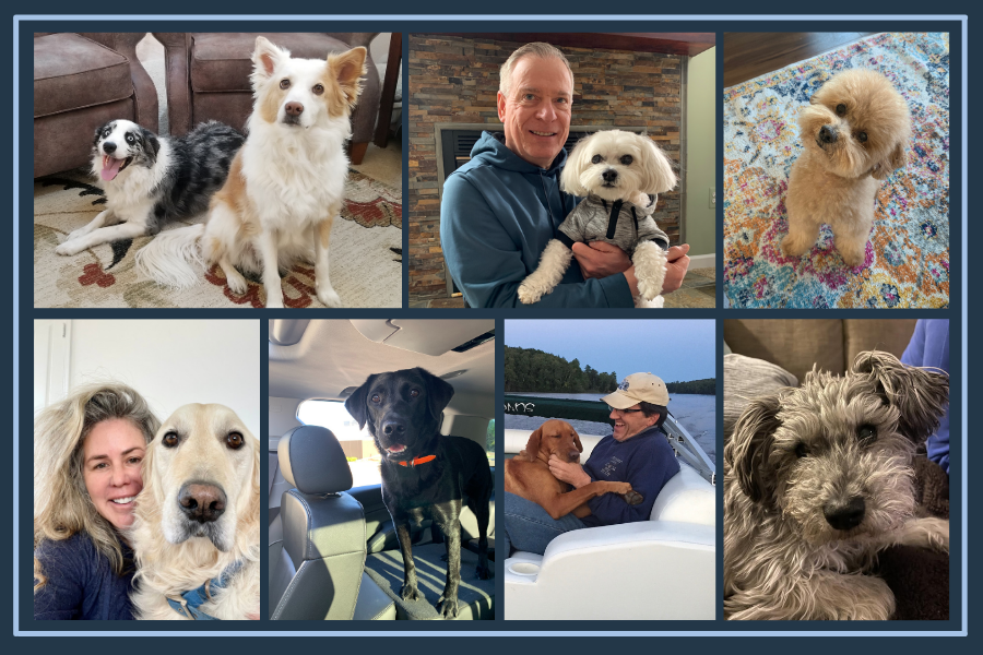 Meet the Kradle® Dogs in Honor of National Love Your Pet Day