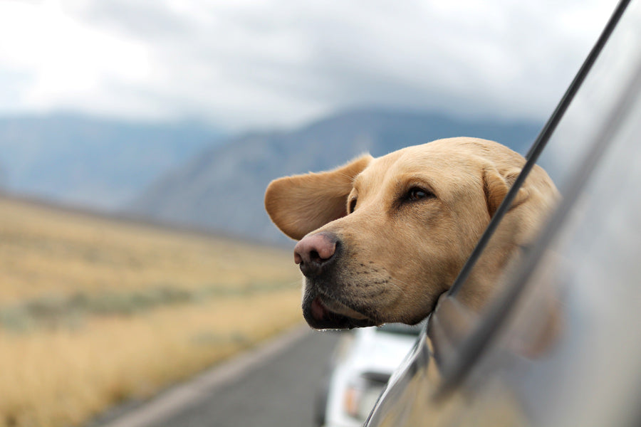 Summer Vacation & Tips for Hitting the Road with Your Dog