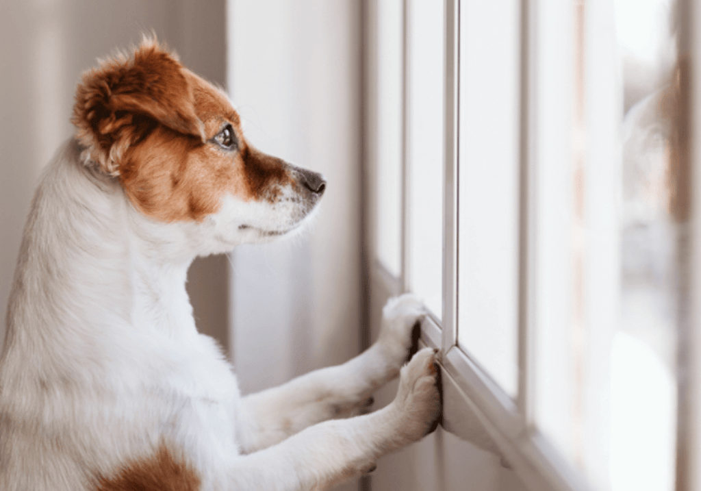 Pets in a Pandemic – Human-Animal Connection Deepens