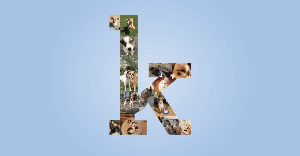Kradle™ Celebrates World Photo Day with Photo Wall of Kradle Team's Dogs