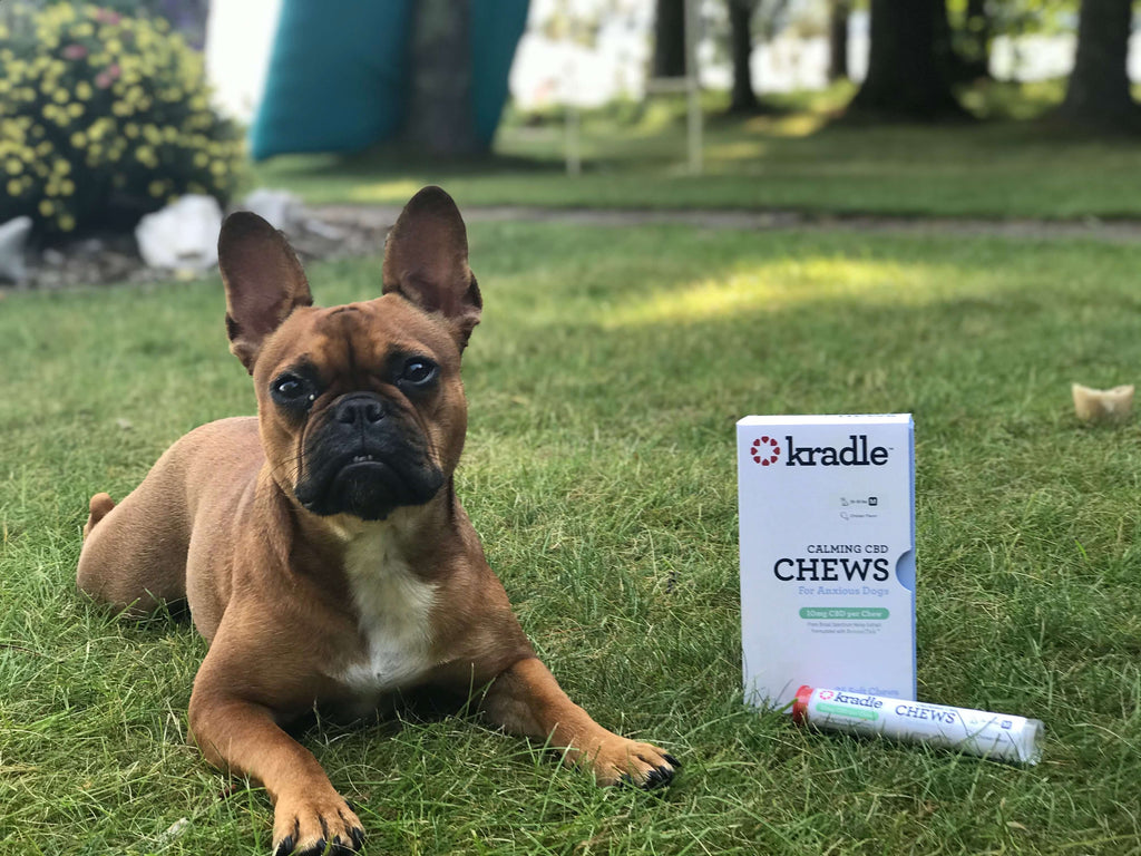 Kradle® Expert Lee Mayberry Answers All Your Questions About CBD for Dogs