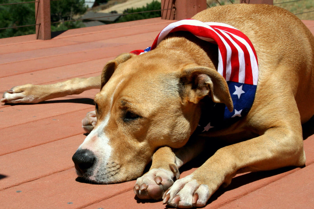 Just in Time for July 4 Holiday Kradle™ Unveils CBD for Calming Dogs