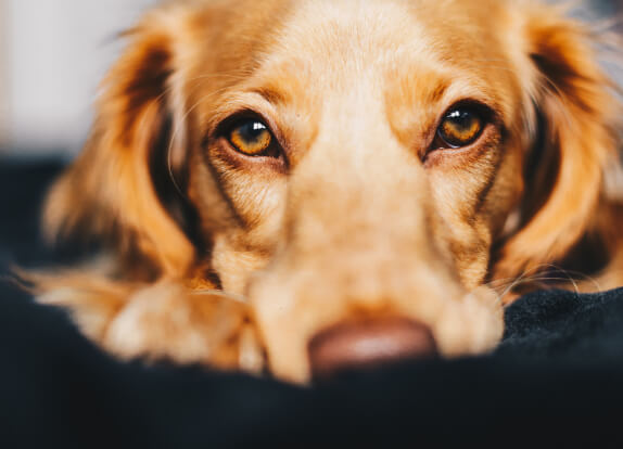 Identifying Stress in Your Pet